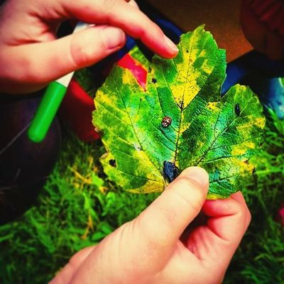 Leaf it out! Little_munchkin_patch_Childcare