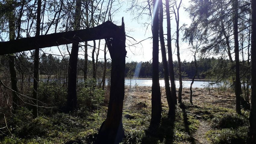 Wildlife & Nature Wildlifephotography Forest Walk Sunnyday🌞 LakeviewEstonia Forest Hills Spring 2017 Estonian Nature Sunshine ☀ Freshness Out Of The City Tree Nature No People Beauty In Nature