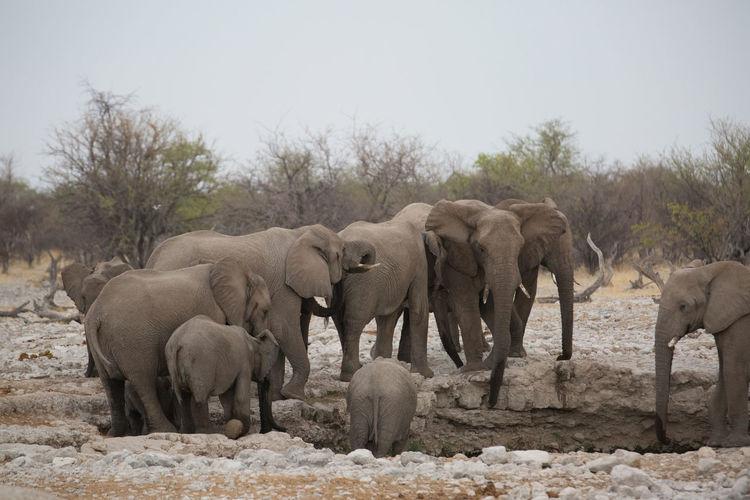 Elephants on ground in zoo