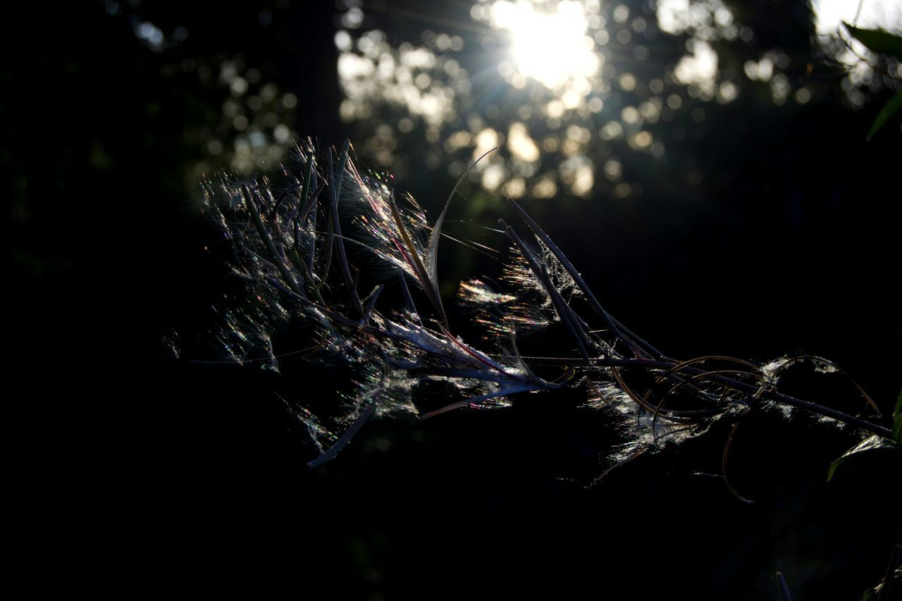 nature, no people, close-up, sunlight, outdoors, day, growth, fragility, beauty in nature