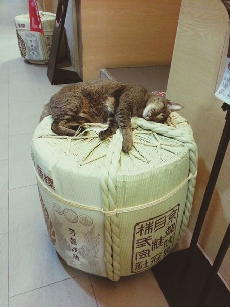 comfort Zone ♥ Cat Sleeping Relaxing Slacking