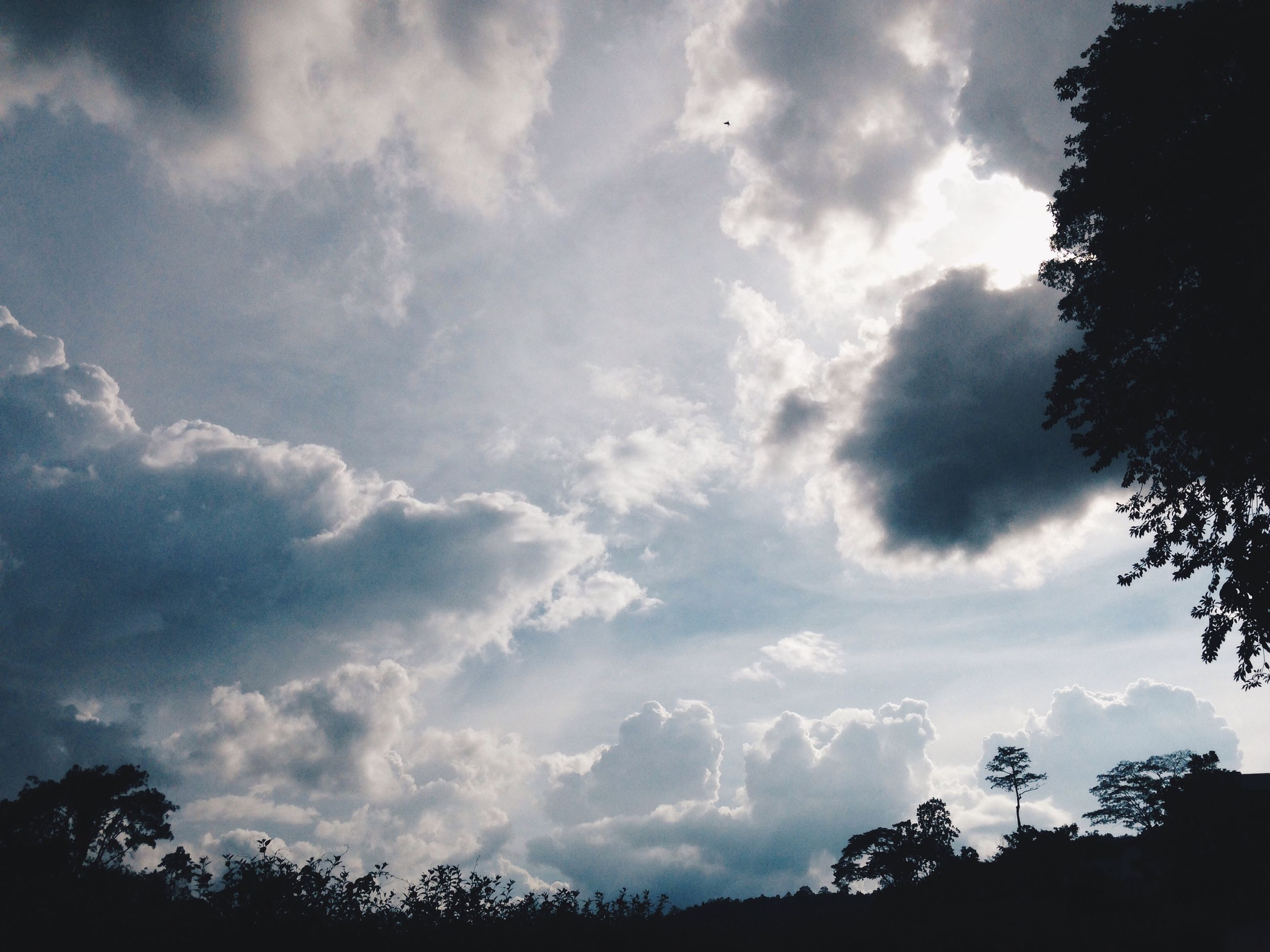 sky, silhouette, low angle view, tree, cloud - sky, tranquility, cloudy, beauty in nature, nature, cloud, scenics, tranquil scene, growth, high section, outdoors, dusk, no people, blue, outline, idyllic
