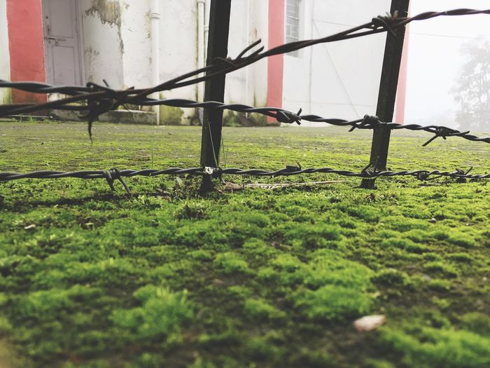 Little_stories Nature Grass Green Color Day Grassy No People First Eyeem Photo