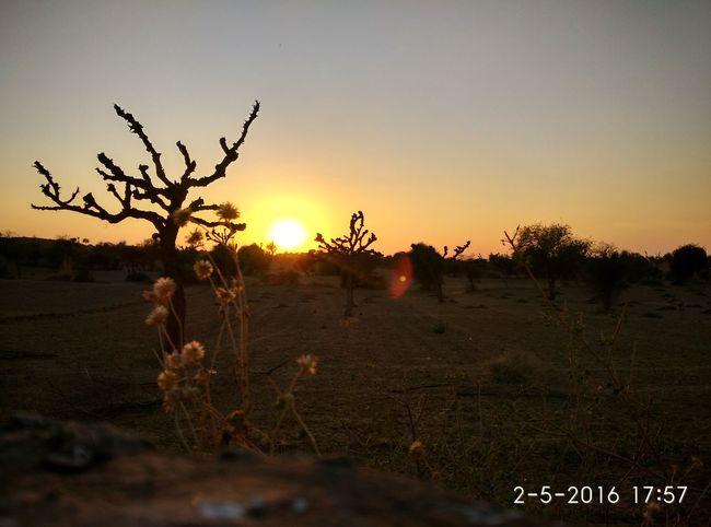 Growth Landscape Loong Tree Mandawa Nature Rajasthan Sunset Tree First Eyeem Photo