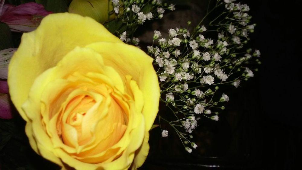 Yellow Roses Babysbreath Flower Bouquet  No Edits No Filters EyeEm Best Shots - No Edit