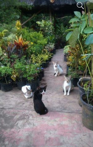 +cat Assembly Bird Tree Pets High Angle View Full Length