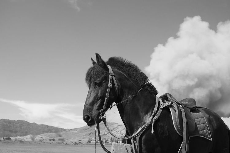 Black horse Animal Themes Black And White Bridle Cloud - Sky Day Domestic Animals Horse Mammal Nature One Animal Outdoors People Sky Working Animal