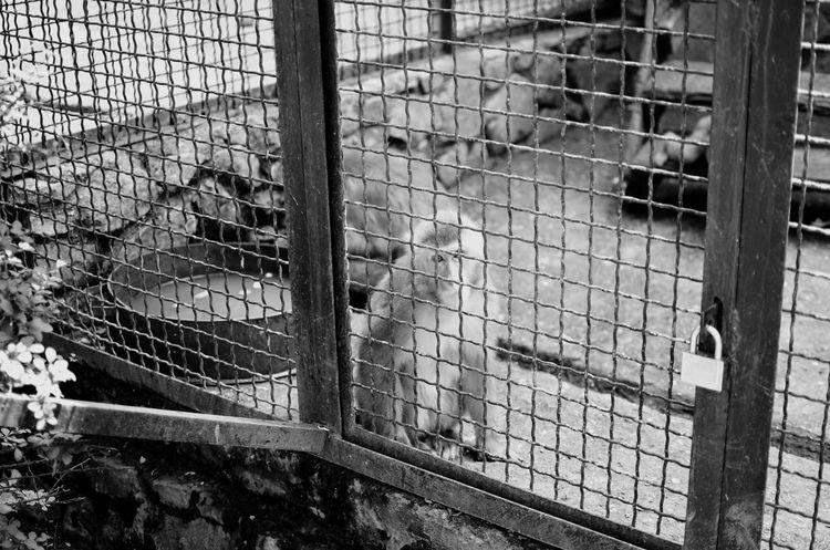 Blackandwhite Monochrome Photography Animals Monkey