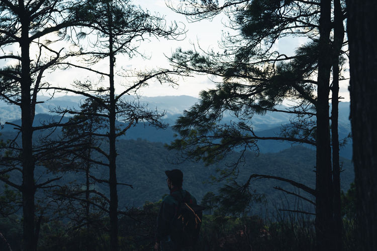 Man by trees in forest against sky