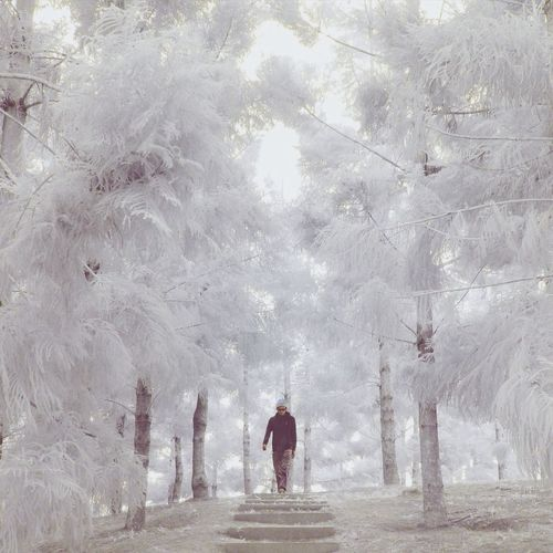 Infrared image of man walking amidst trees in park