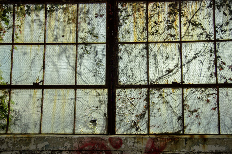 Abandoned Bad Condition Brick Wall Broken Closed Damaged Decoloration Geometry Glass Glass - Material Indoors  No People Obsolete Old Shadow Transparent Vines Window