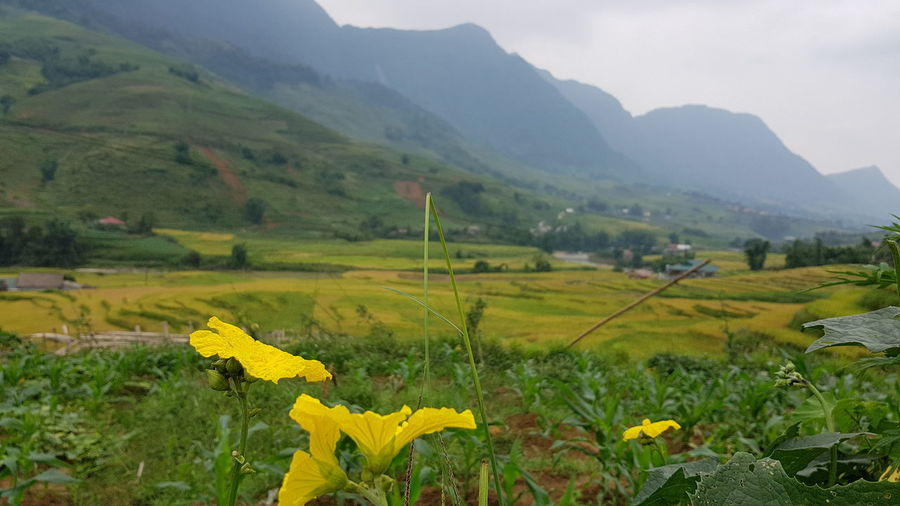 Agriculture Beauty In Nature Day Field Flower Freshness House Landscape Mountain Nature No People Outdoors Plant Rural Scene Scenics Travel Destinations Village