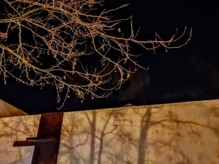 Branch Close-up Ihaveathingforwalls Low Angle View Nature Night No People Outdoors Shadows Shadows & Lights Sky Tree