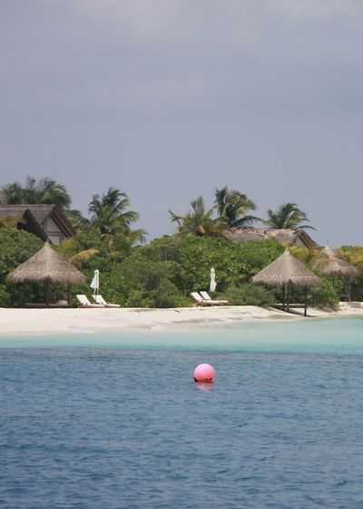 Tropical Beach on a Maldivian Island Holiday Indian Ocean Relaxing Travel Beach Beauty In Nature Day Horizon Over Water Landscape Nature Outdoors Palm Tree Paradise Sand Scenics Sea Sky Summer Sunbeds Thatched Roof Beach Huts Dotting The Coastline Tropical Tuquoise Water Been There.