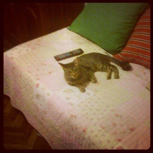 La popis Thecat Die Katze