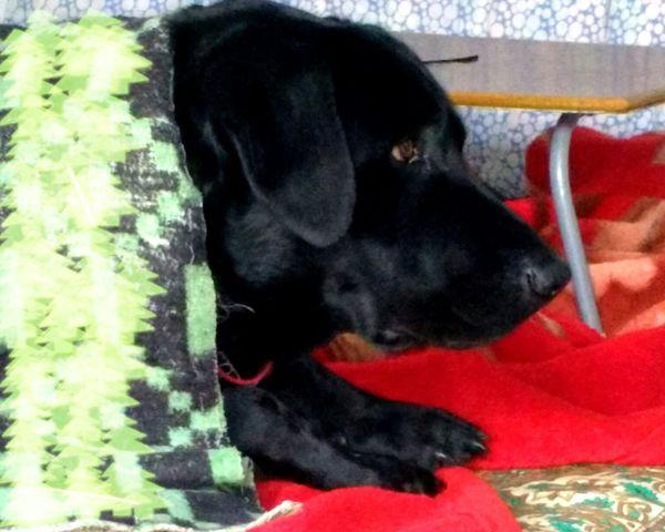 My Dog Sleepy Doggy My Dogs Are Cooler Than Your Kids Pets Corner Dog❤ Dogoftheday Dog Love Dog Lover Dogstagram Doglovers Love ♥ Cute Pets First Eyeem Photo I Love My Dog EyeEm Pets