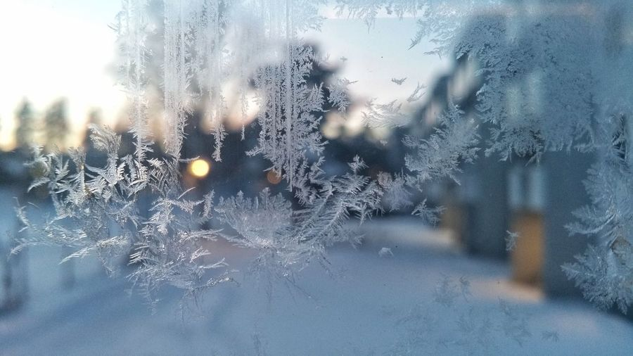 Close-Up Of Snowflakes On Glass Window