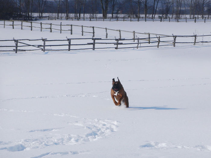 Dog running on snow field
