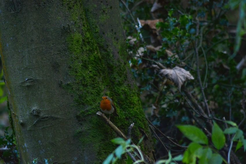 Allmyphotography Animal Themes Animal Wildlife Animals In The Wild Autumn Stroll Bird Day EyeEm Nature Lover Nature Nikonphotography No Edit/no Filter No People One Animal Outdoors Perching