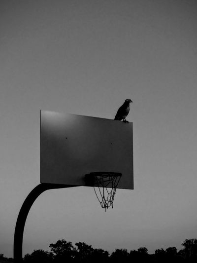 Basketball Hoop Outdoors No People Bird Perch Chain Net Backboard Dusk Last Light Last One On The Court Bird Basket EyeEmNewHere Solo Lonely Sense Of Loneliness Depressed Dark Gloomy