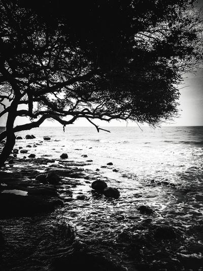 Silhouette_colle