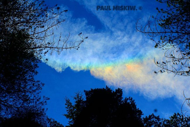 Sun Dog Tree Sky Silhouette Cloud - Sky Nature Forest Beauty In Nature No People Low Angle View Outdoors Day Clouds And Sky Pink Clouds