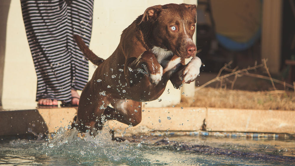 Animal Themes Day Dog Domestic Animals Mammal Motion One Animal One Person Outdoors Pets Photography Playing Real People Splashing Water