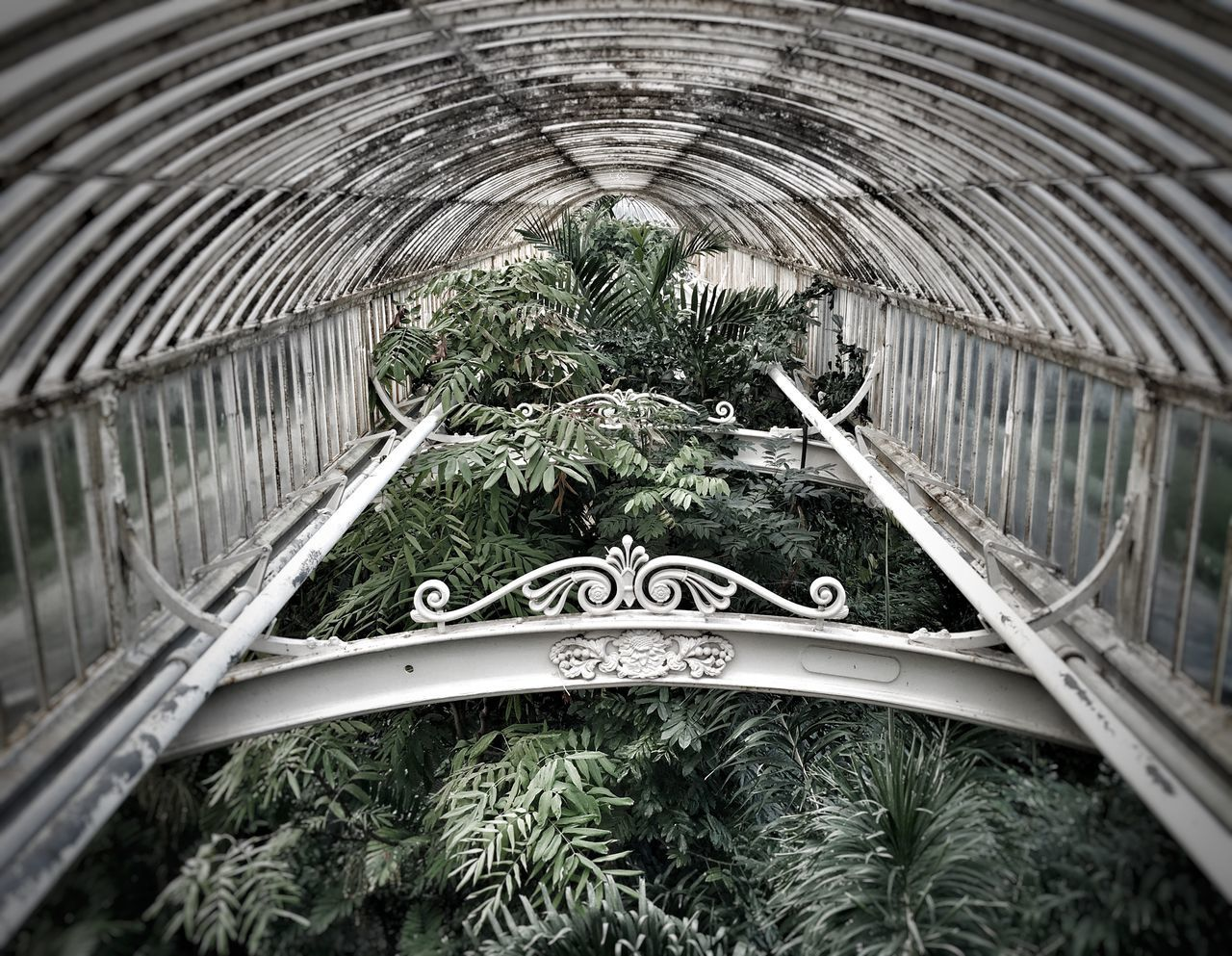 plant, growth, no people, indoors, day, nature, tree, leaf, architecture, metal, close-up, plant part, built structure, arch, green color, high angle view, selective focus, pattern, ceiling