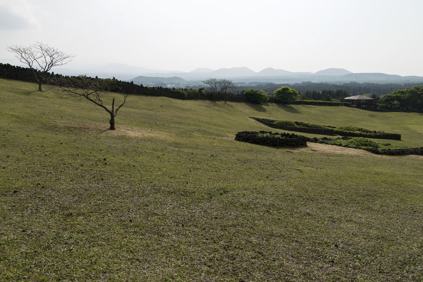 view of Sangumburi, a dormant volcano crater in Jeju Island, South Korea Beauty In Nature Clear Sky Crater Day Dormant Volcano Field Grass JEJU ISLAND  Landscape Mountain Nature No People Outdoors Sangumburi Scenics Sky Tranquil Scene Tranquility Tree
