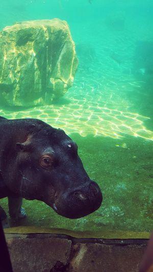 Underwater First Eyeem Photo