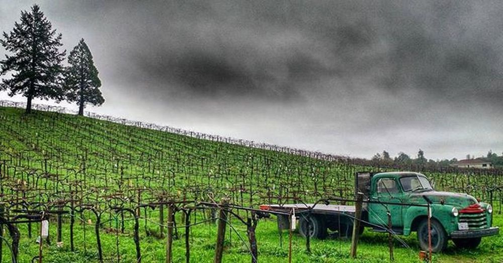 Acornwinery Healdsburg Wineland2016 Wildbayarea