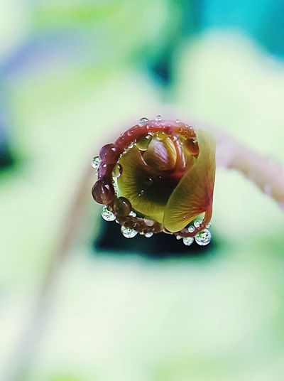 Fern shoot to ensure beginning of life water is as essential Close-up Drop No People Wet Selective Focus Plant Nature Day Water Beauty In Nature Outdoors Green Color Macro Dew Nature A New Beginning