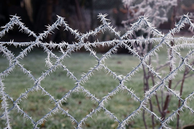 Mesh wire fence with a cristal ice coat Cold Temperature Cristals Cristals On A Wire Fence Focus On Foreground Ice Coated Like A Spider Web Mesh Wire Fence Outdoors Winter Garden Wintertime Wire Fence Close Up,