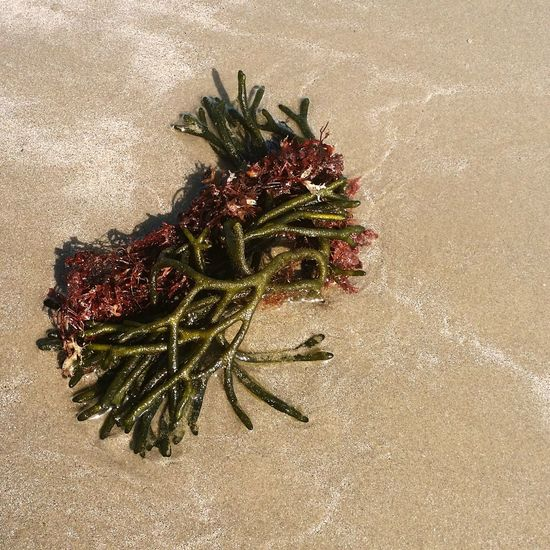 Second Beach Seaweed Nature Lover Sand Beautiful Nature Beautiful Day Green Rhodeisland Beach Walks Water day at the beach