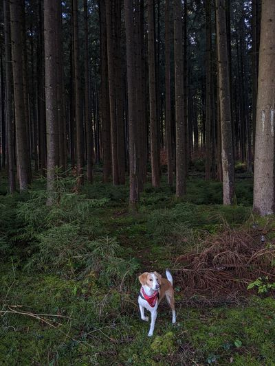 Dog in the forest