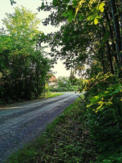 Tree Road Sky