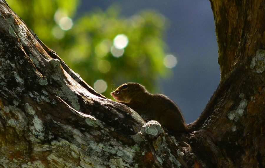 Squirell Squirrel On Tree Animal Wildlife One Animal Animals In The Wild Tree Nature Animal Animal Themes