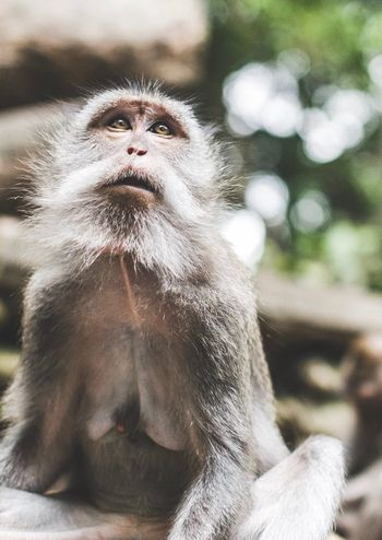 Curious monkey Monkey Forest Monkey Primate Mammal Animals In The Wild Animal Wildlife One Animal Vertebrate Ape Focus On Foreground No People Day Portrait Zoo Relaxation Nature Sitting