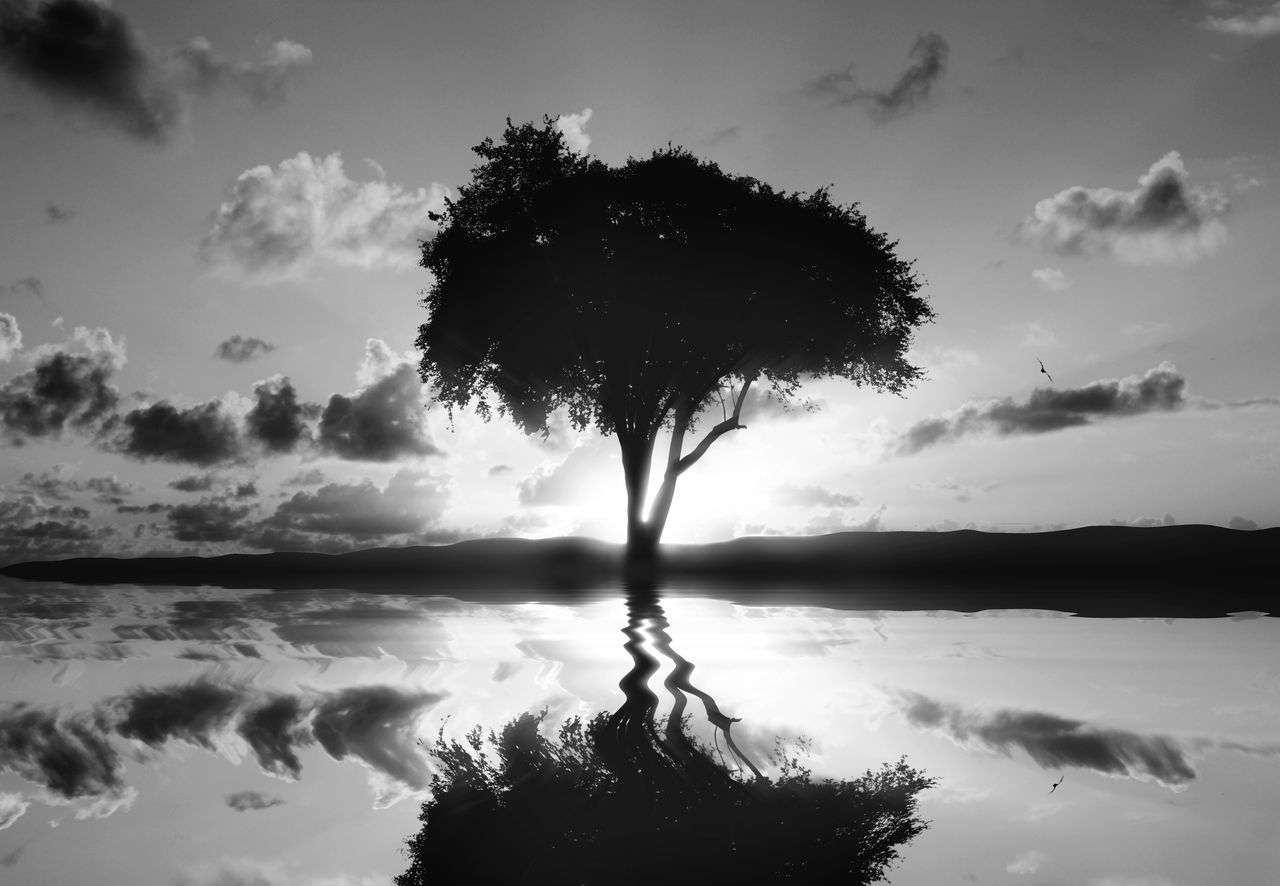 Reflection Of Silhouette Tree In Calm Lake