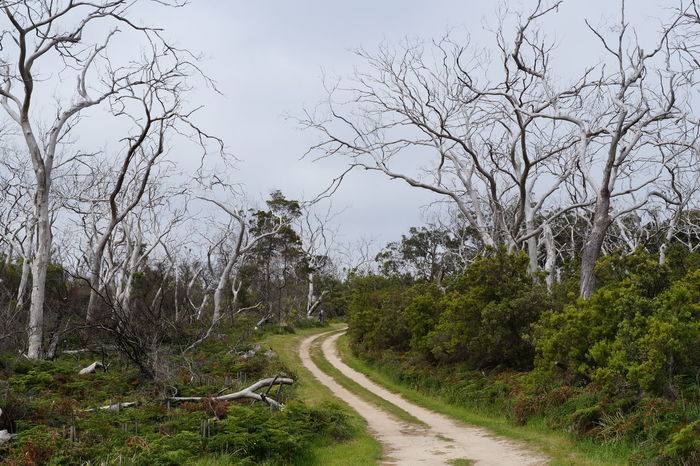 Australian Landscape Great Ocean Road Road To Nowhere Victoria Bare Tree Bare Tree Branches Bare Trees Beauty In Nature Branch Bush Fire Bush Walk Day Forest Grass Landscape Nature No People Otways Outdoors Road The Way Forward Tranquility Travel Destinations Tree EyeEmNewHere