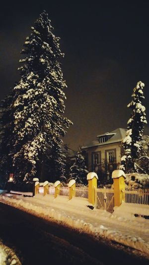 It's Cold Outside Snow ❄ ALL WHITE EVERYTHING White Tree Snow Covered Snow On Trees Winter Night