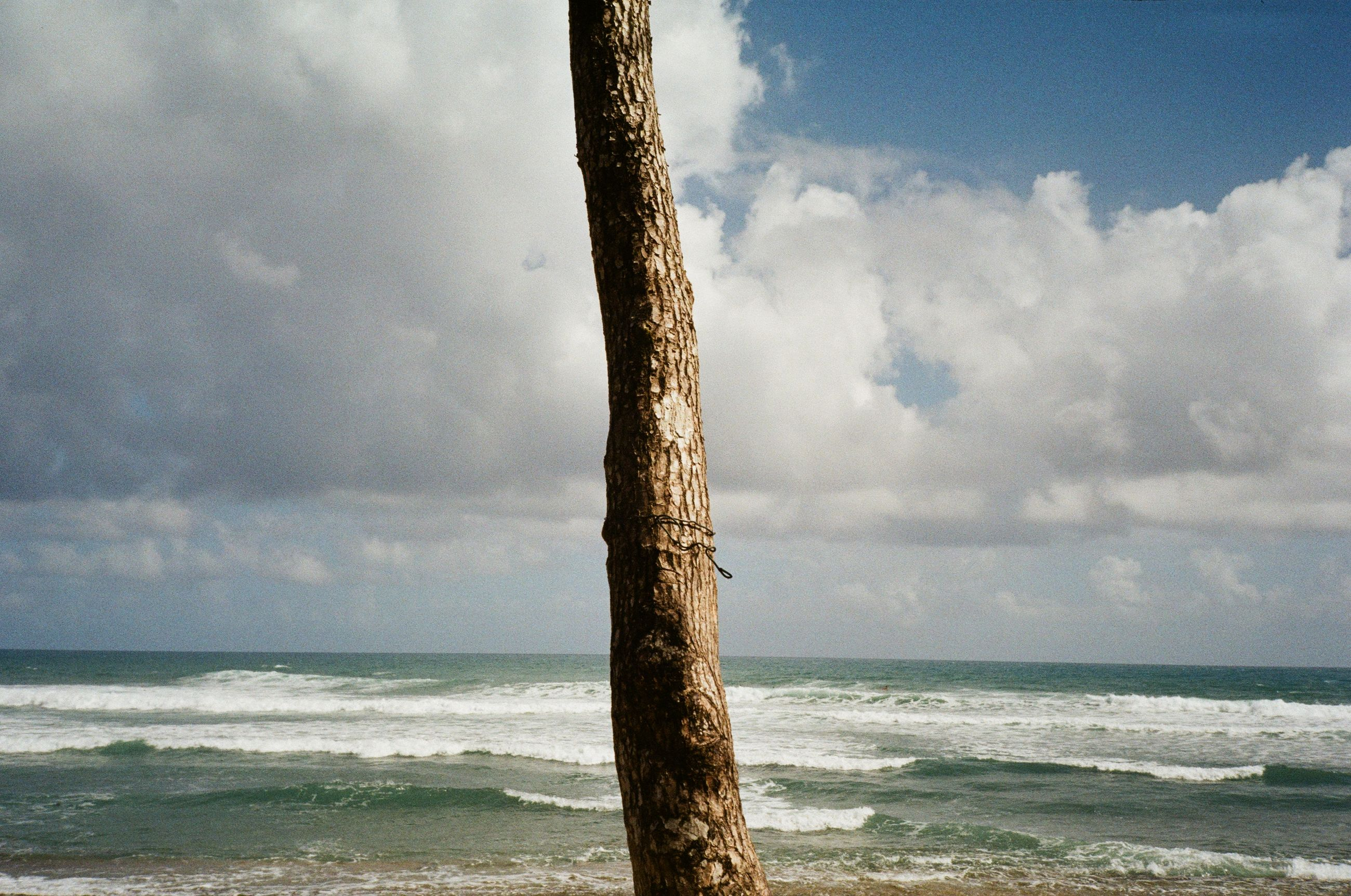 sea, water, sky, land, beach, cloud, body of water, ocean, shore, nature, beauty in nature, horizon over water, horizon, wave, scenics - nature, coast, motion, wind wave, wind, tree, no people, tranquility, sports, tree trunk, rock, environment, outdoors, day, trunk, tranquil scene, tropical climate, storm, sand, plant, travel destinations, idyllic, water sports