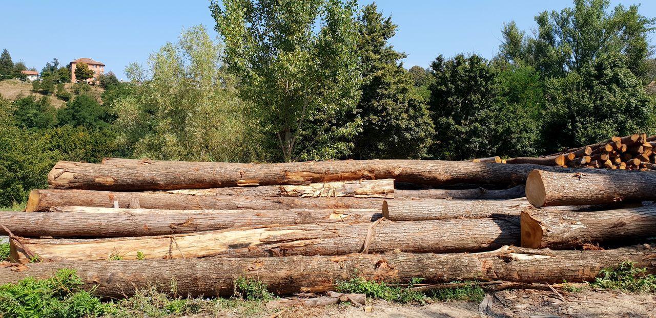 Lumberyards EyeEm Selects Trunk Tree Trunkofwood Lumber Industry Lumber Mill Lumberyard EyeEm Best Shots Eye4photography  EyeEm Gallery EyeEm EyeEmBestPics Trees Treescollection Tree Woodpile Stack Timber Deforestation Log Lumber Industry Sky Forestry Industry Firewood