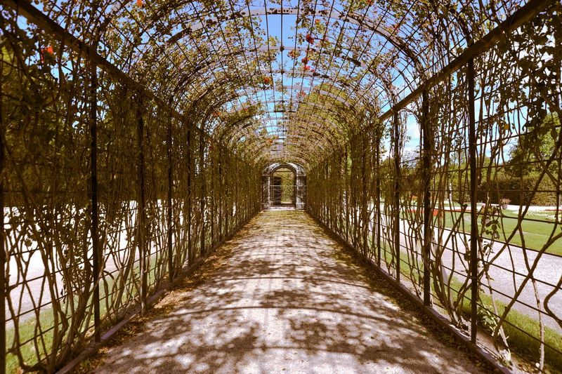 Garden walkway covered with arch fence