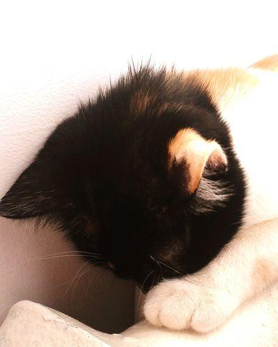 MyLittleCat 💕 🐱 Adorable Cat  Cat Lovers EyeEm Animal Lover Lovely Cat 😻 Cat ♡