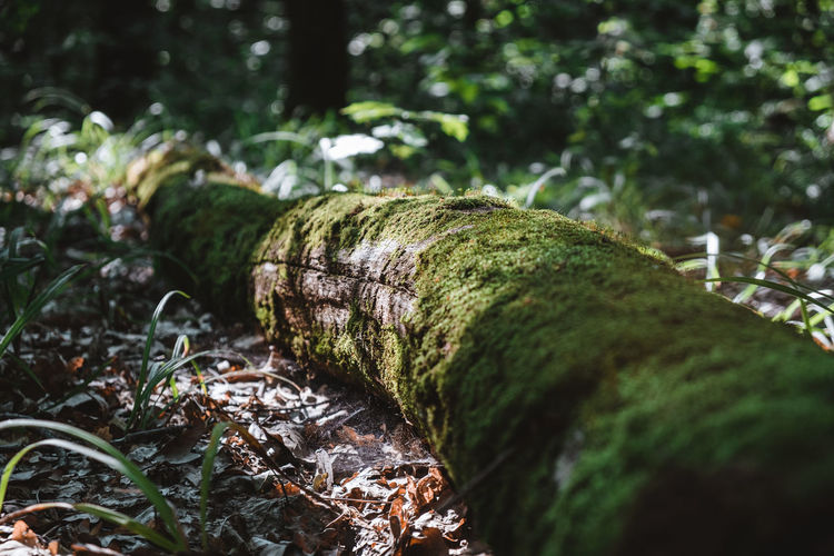 A trunk fallen in the forest overgrown with moss. outdoor recreation concept.