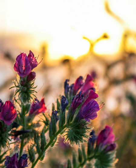 Beauty In Nature Close-up Day Flower Flower Head Fragility Freshness Growth Nature No People Outdoors Petal Plant Sky Sunset