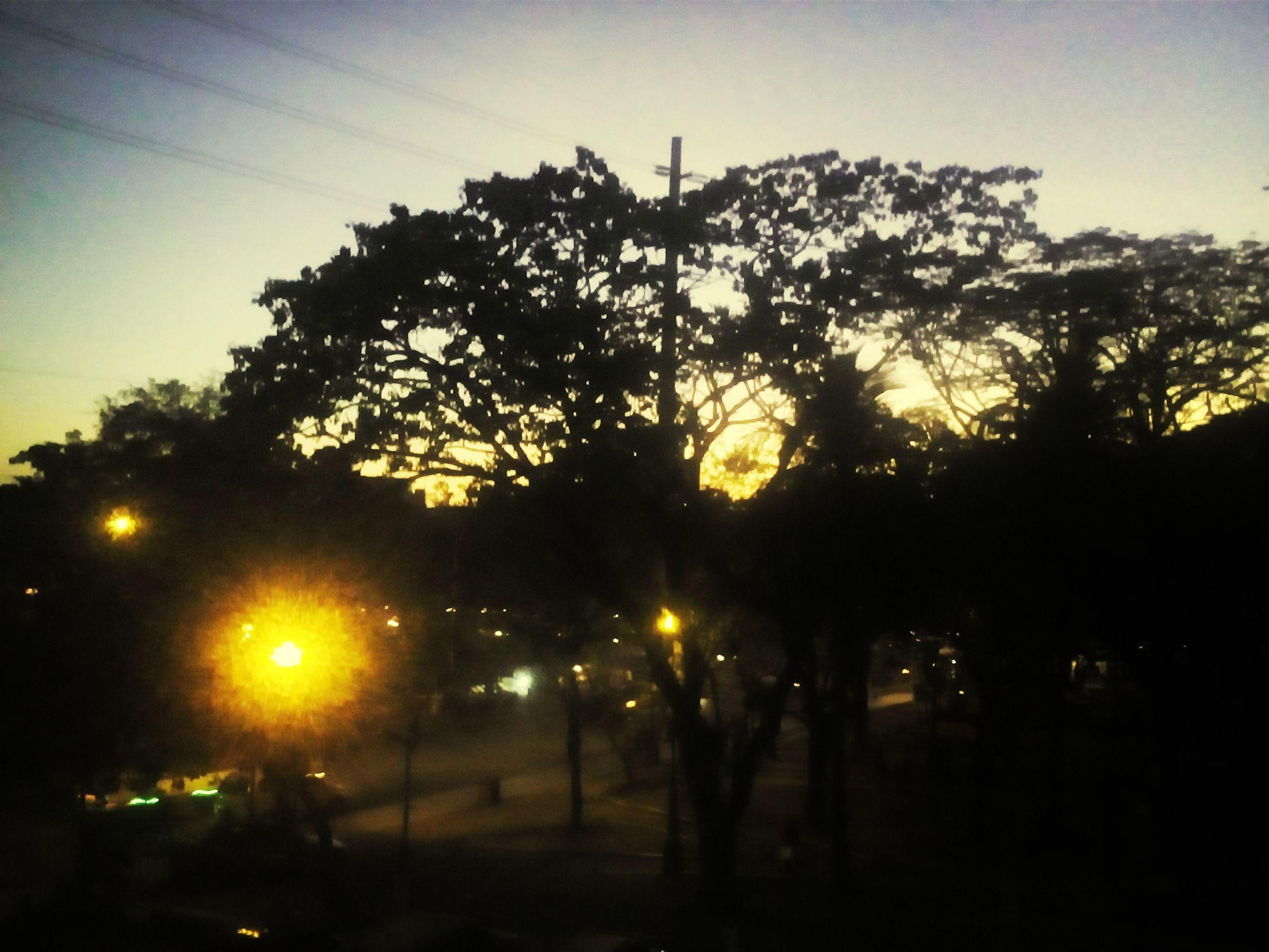 tree, silhouette, sunset, tranquility, sky, nature, tranquil scene, dusk, beauty in nature, illuminated, growth, scenics, street light, dark, outdoors, no people, branch, clear sky, road, outline