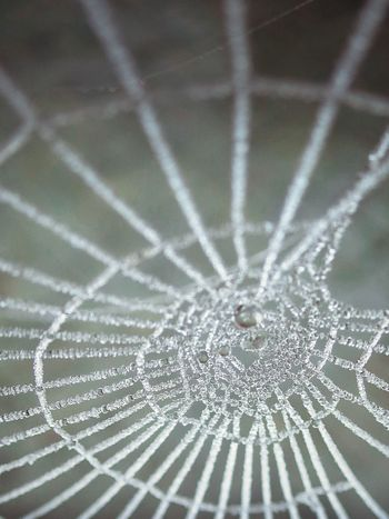 Spider Web Spider Close-up Fragility Web No People Nature Animal Themes Winter Cold Frozen Frozen Web One Animal Beauty In Nature Day Complexity Outdoors Animals In The Wild