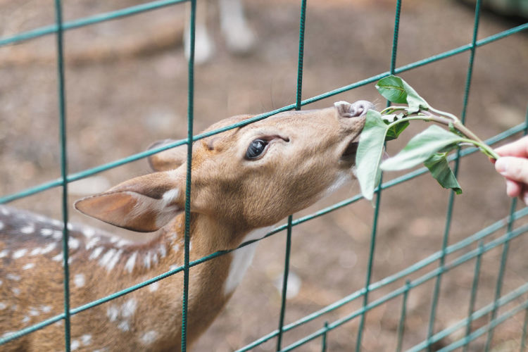 Animal Themes Mammal Animal Fence One Animal Barrier Boundary Metal Domestic Animals Close-up Animals In Captivity Animal Body Part No People Focus On Foreground Day Vertebrate Animal Head  Cage Pets Dog Zoo Herbivorous Deer Reindeer